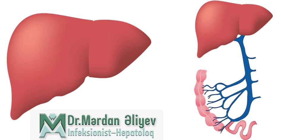 Hepatit Virusları, hepatit, qaraciyer