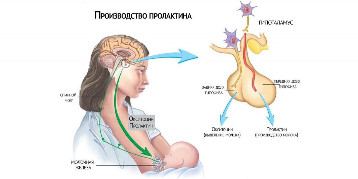 Qadınlarda Prolaktin hormon yüksəkliyi və süd vəzlərindən südün gəlməsi (qalaktoreya)